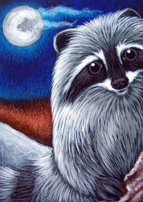Raccoon Full Moon
