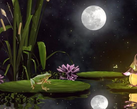 frog moon