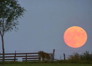 Harvest Moon-farm