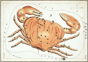 Cancer the Crab (Wikipedia)