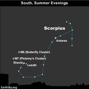 Scorpius in the night sky