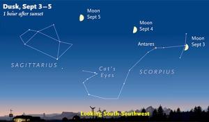 Sagittarius in Night Sky