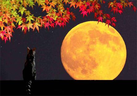 Hunter's Full Moon