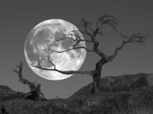 Taurus Full Moon (paradisefoundsantabarbara)