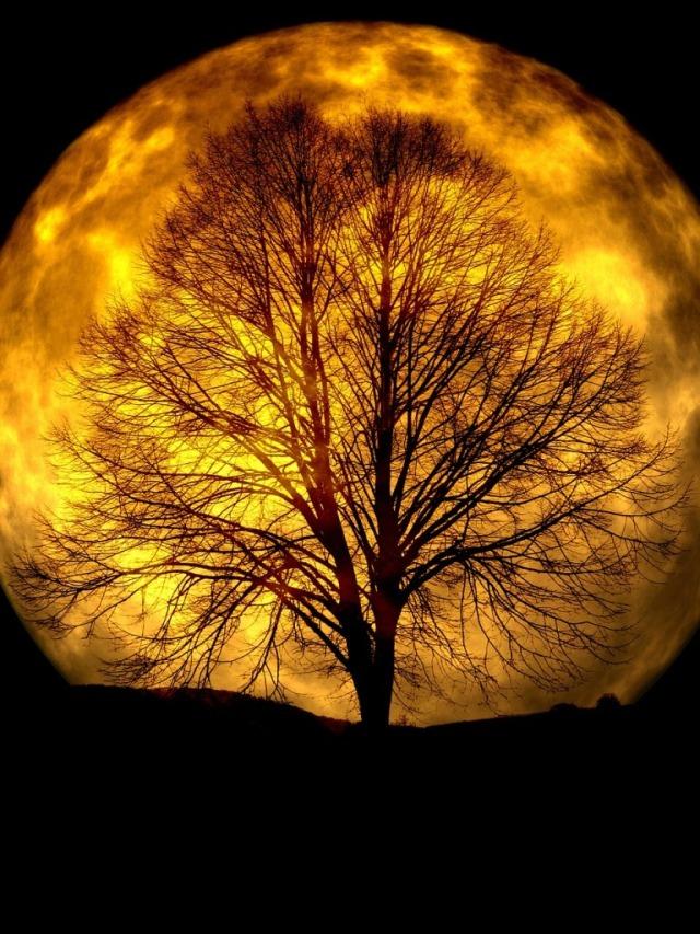 Full Moon (Sally Kirkman)