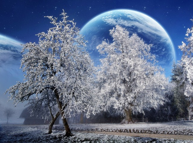 Space Moon Behind Icy Trees (desktopnexus)