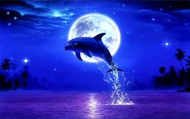 Dolphin full moon