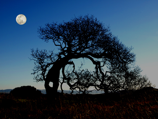 Moon Over Tree Hole (© Ron Storey)