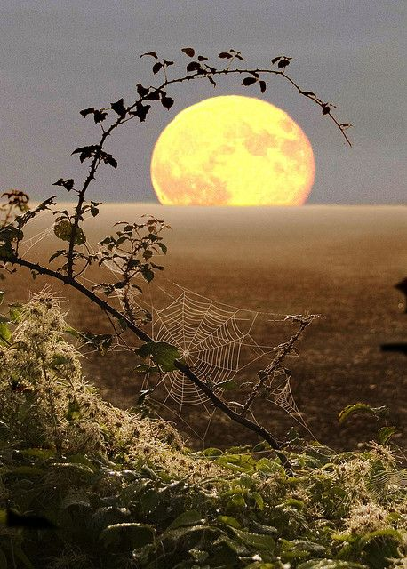 "Harvest Moon (""Regina's World"" ©Nick Owen)"