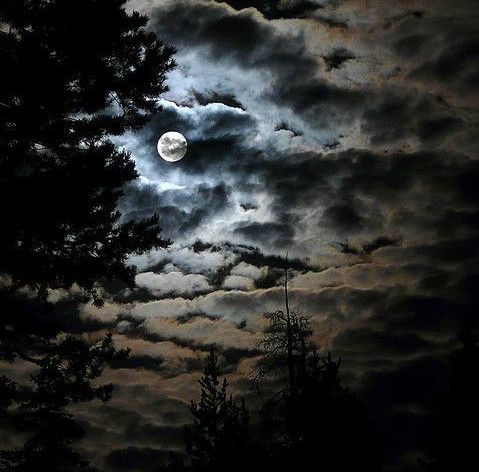Dark Night Moon